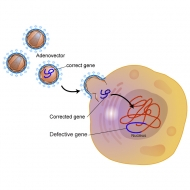 Gene therapy process illustrated