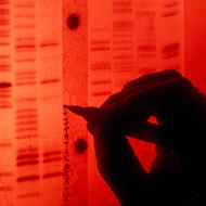 Sequencing Human Genome